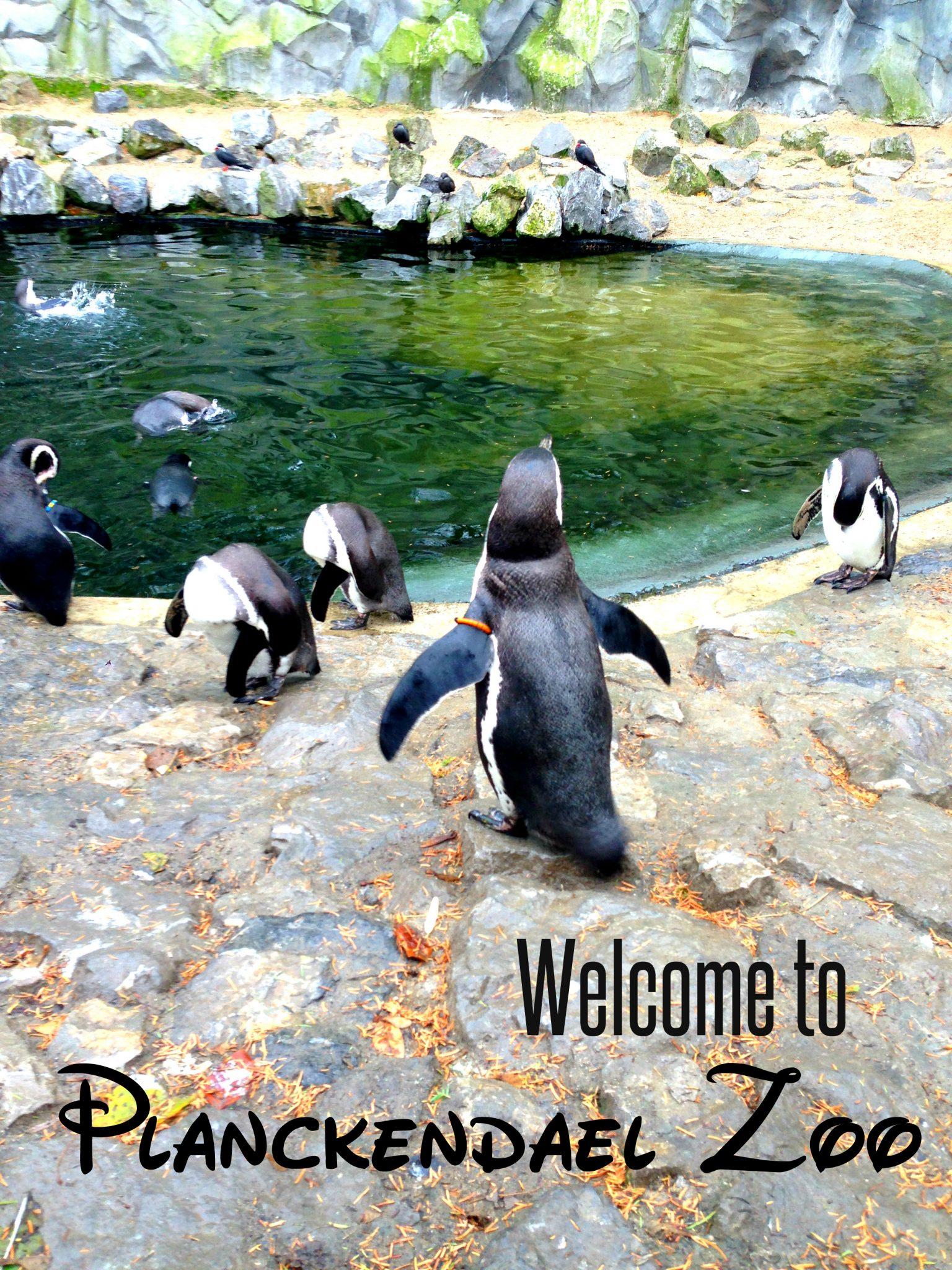 Planckendael Zoo, Antwerpen